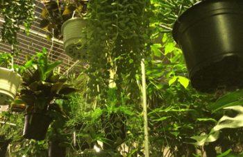 癒やしのジャングル