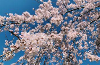 4月から変わる、新しい仕組み「働き方改革」と有給休暇消化義務について