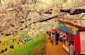 桜咲く河川敷でお花見