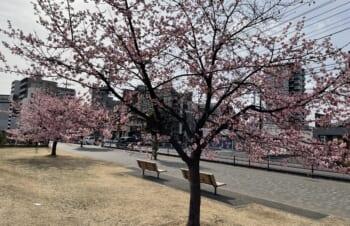 緊急事態宣言解除後の桜を見て思う